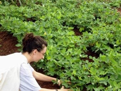 Ghana, una volontaria al lavoro in una fattoria biologica