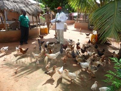 La fattoria biologica sede del progetto di volontariato di agricoltura biologica in Togo