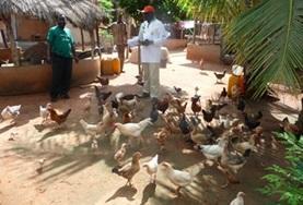 Volunteer Agricoltura