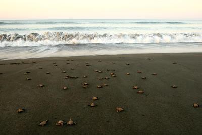 Il progetto di tutela ambientale di Projects Abroad e il rilascio delle tartarughe nell'oceano