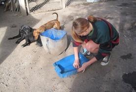 Volunteer Veterinaria & volontariato con gli animali