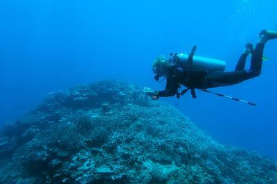 Campi di volontariato senior e tutela degli squali alle isole Fiji