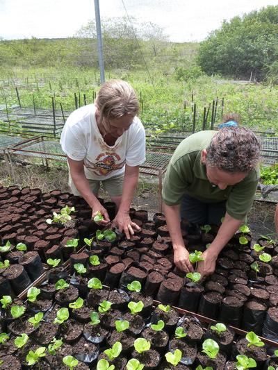 Volontario del campo ambientale e di sviluppo comunitario alle Galappagos, Ecuador