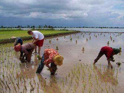 Volontariodurante le attività del progetto di volontariatoculturale in Cambogia