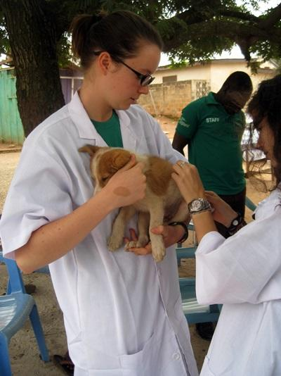 Stage di medicina veterinaria in Ghana