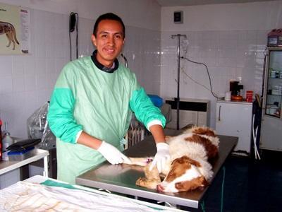 Un volontario del progetto di veterinaria a Brasov, Romania