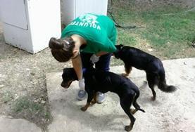 Volontaria in Jamaica medica cani