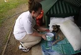 Volunteer Veterinaria & volontariato <br /> con gli animali