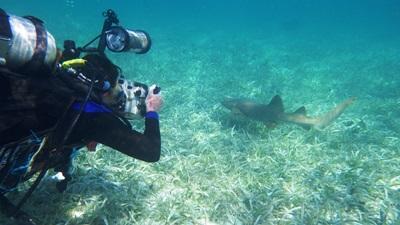 Tutela dei fondali marini in Belize
