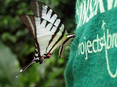 Perù, una farfalla si posa sulla maglietta di un volontario
