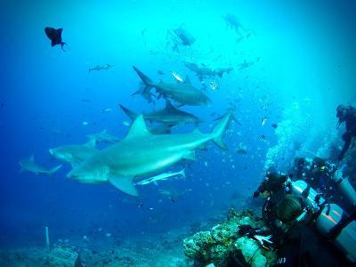 I volontari di Projects Abroad nelle Isole Fiji impegnati nelle immersioni