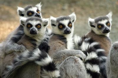 Volontariato ambinetale in Madagascar
