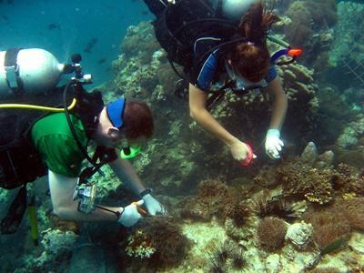 Alcuni volontari del progetto di tutela ambientale in Thailandia ripuliscono la barriera corallina