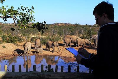 Un volontario ambientale di Projects Abroad durante le attività di censimento degli elefanti alla riserva Wild at Tuli