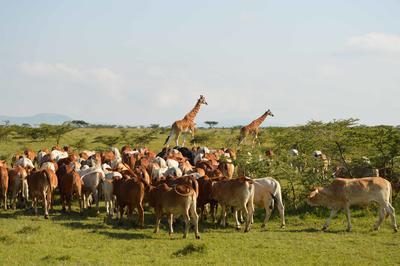 Turismo e volontariato in Kenya
