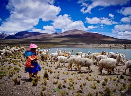 Un volontario con abiti tradizionali peruviani insieme ad un gregge di animali ad Urubamba