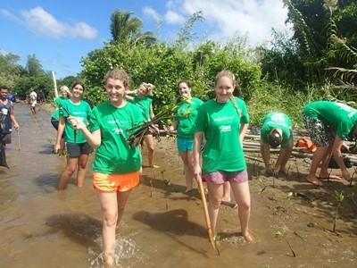 Volontari nelle Fiji impegnati a piantare mangrovie